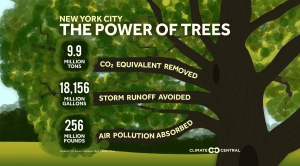 The Power of Trees: Fighting Floodwaters Local Numbers