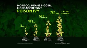 Hiking Hazards: Ticks and Poison Ivy