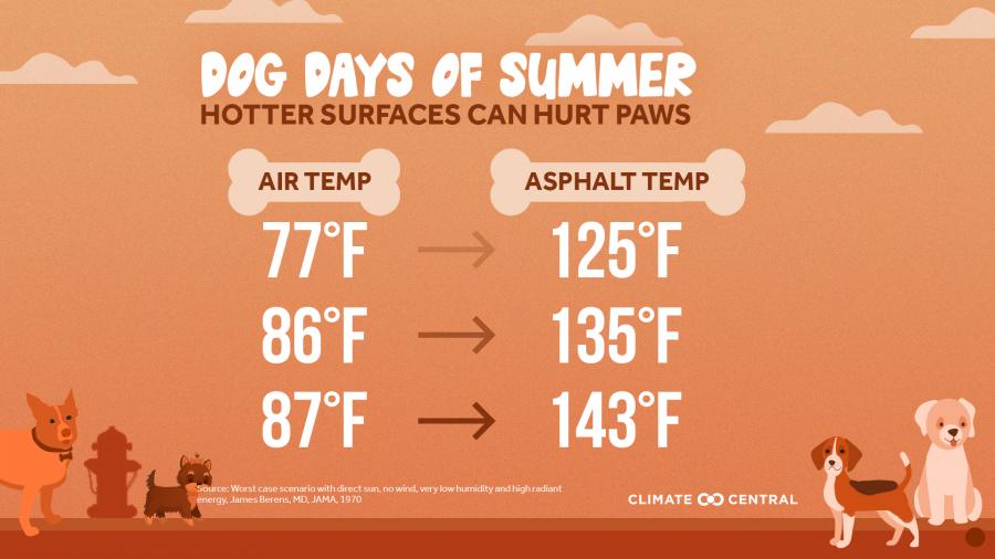 Dog Days of Summer: When Heat Endangers Pets