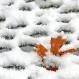 U.S. Winters Are Seeing More Rain, Less Snow
