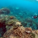 Scientists Counter Climate Change by Testing Reefs