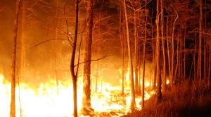 Humans Blamed for Starting Most Wildfires in the U.S.