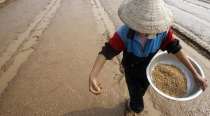 Research for Drought-Resistant Crops Gets Boost