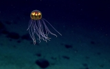 Deep Sea Life Faces Dark Future With Warming