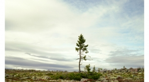 'Oldest Living Things in the World' Tell a Tale of Climate
