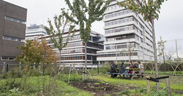 Pour it on: How Dutch cities are soaking up rain and reducing flooding