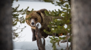A Simple Idea Could Help Wildlife Survive Climate Change