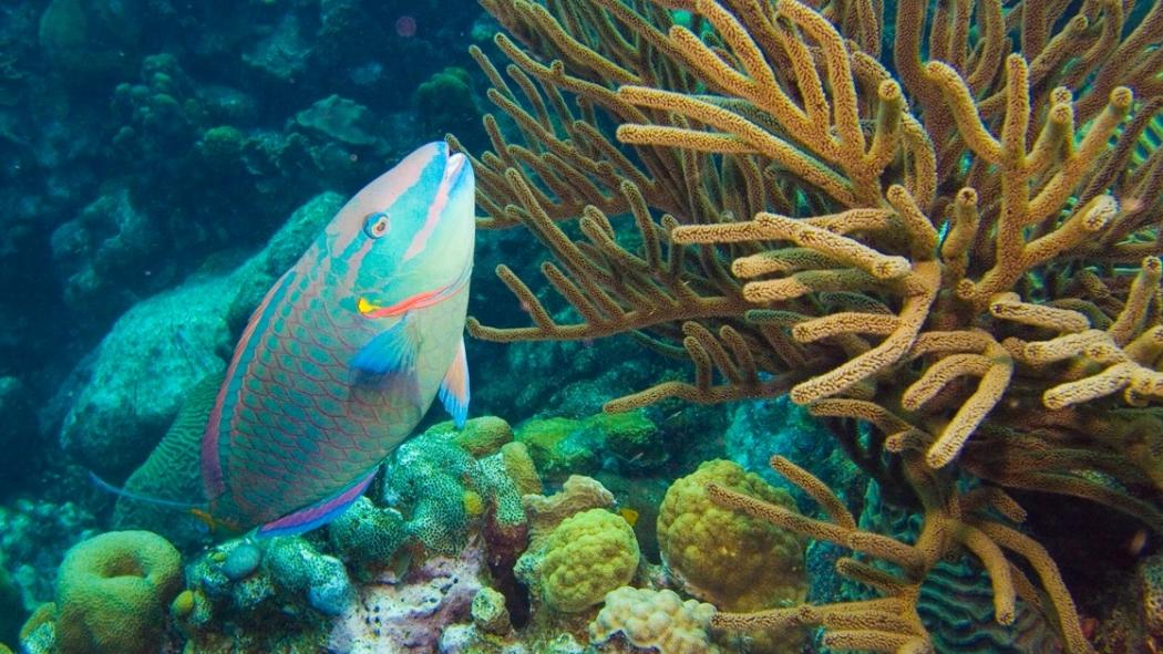 sneakers voor goedkoop goede verkoop aankomen Overfishing and Pollution Kill Corals in a Warming World ...