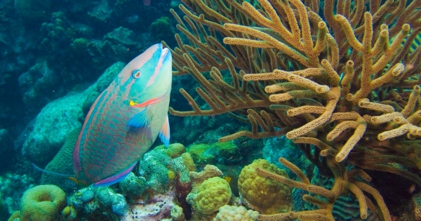 Overfishing and Pollution Kill Corals in a Warming World
