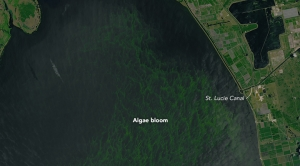 Warming Could Mean More Algae Blooms Like Florida's