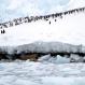 Antarctic Peninsula Has Cooled, but Warming Will Win
