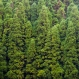 North American Forests Not a Climate Change Remedy