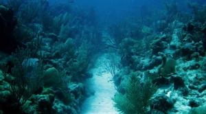 Mexico Launches Scheme to Insure Its Coral Reef