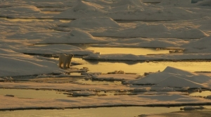 Arctic Sea Ice to Reach Sixth Lowest Extent on Record