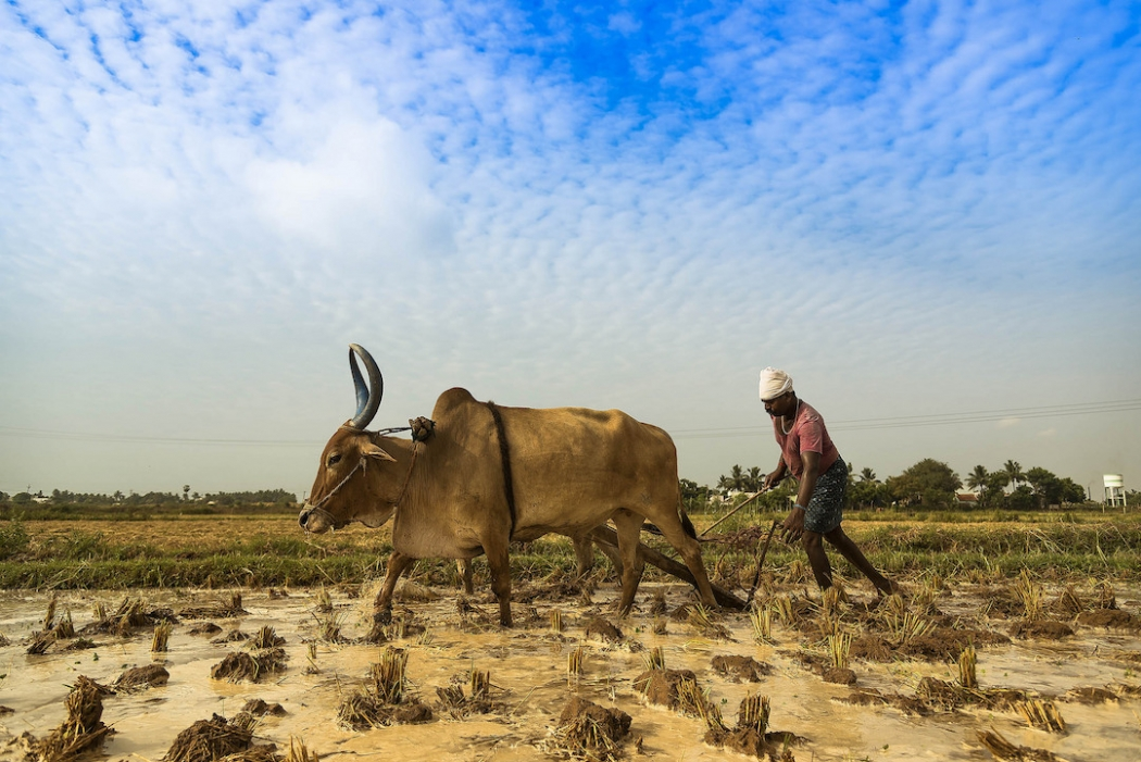 New Findings Show How Climate Change Is Influencing India's Farmer
