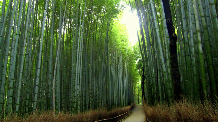 Image Of The Day Bamboo Nature S Renewable Resource