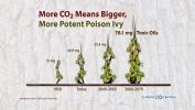 Poison Ivy in a Warming World