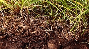 Roots: The Hidden Half of Vegetation-Climate Interactions