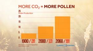 More CO2 = More Pollen